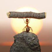 Принцип из философии муравьев